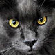 MF_Kitten